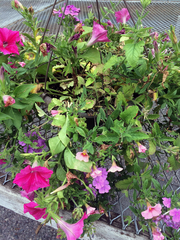 This basket shows the typical early-July look from the stresses of the season.