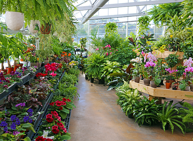 """Our greenhouse is open all winter and  on January 13, 20 and 27 we'll be celebrating """"Breathing Room"""" from 10 AM to 4 PM. Light refreshments and a sale on a special plant. Expert advice from our Green Team. 508-775-8703"""