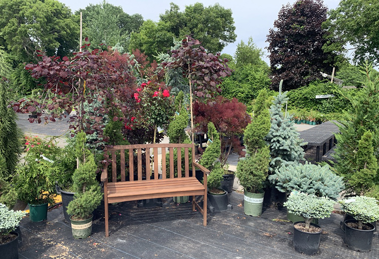As we go into the summer the staff at Country Garden has the space and time to create lovely displays that will give you design ideas and plant suggestions.